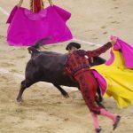 スペイン伝統の闘牛は反対?賛成?