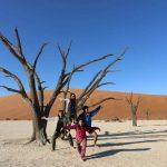 ナミビアの死の沼で奇妙な木を発見。【レンタカー旅3日目】